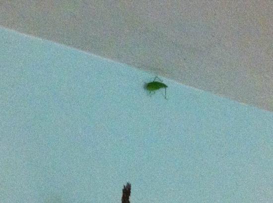 Casa de Kathy: Leaf Bug