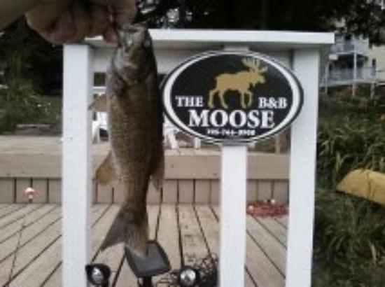 The Moose B&B: Smallmouth Bass caught off dock