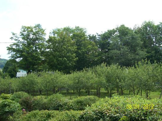 Fly Creek Cider Mill & Orchard 사진