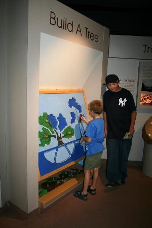 Cape Fear Museum: Activitiy for Children