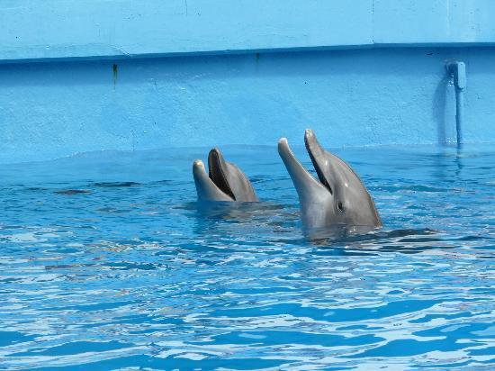 Seaquarium - Picture of Miami Seaquarium, Key Biscayne - TripAdvisor