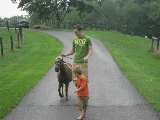 Airy Hill Farm B&B: My boys walking Gail :)
