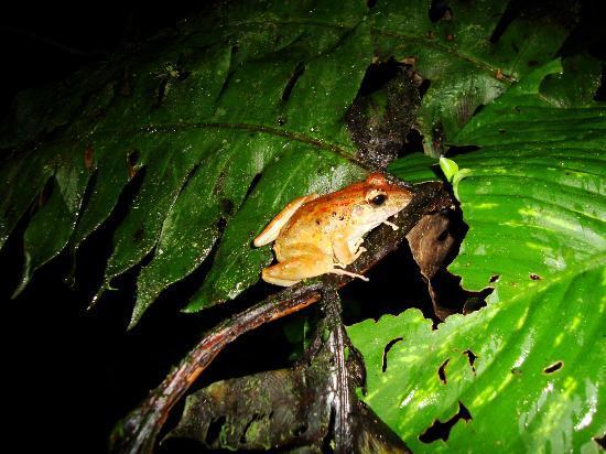 Chachagua Rainforest Eco Lodge: Night walk through the hotel grounds