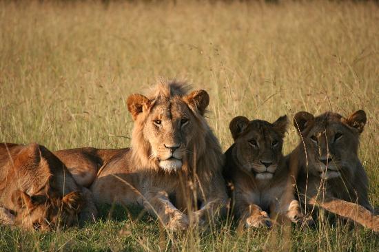 Kicheche Mara Camp: suspicious