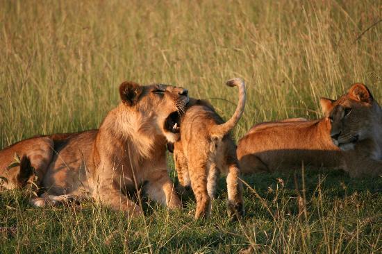 Kicheche Mara Camp: playtime