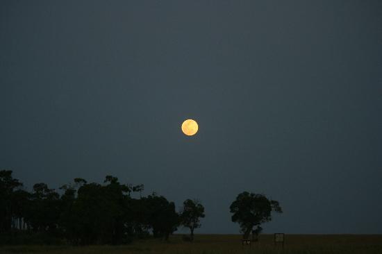 Kicheche Mara Camp: african moon