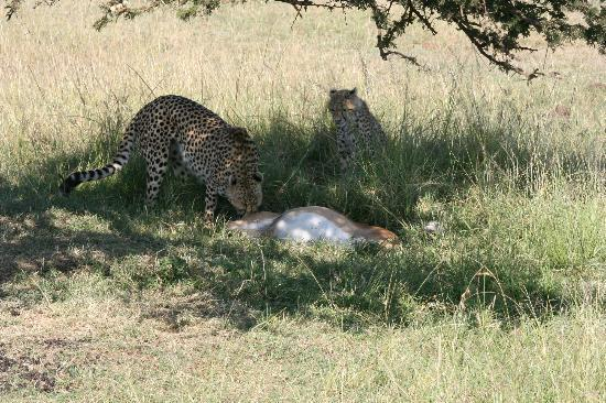 Kicheche Mara Camp: lunch