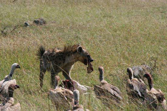 Kicheche Mara Camp 사진