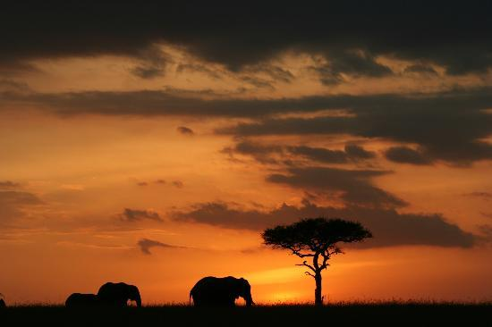 Kicheche Mara Camp: sunset again