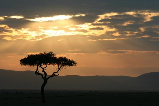 Kicheche Mara Camp: sunset
