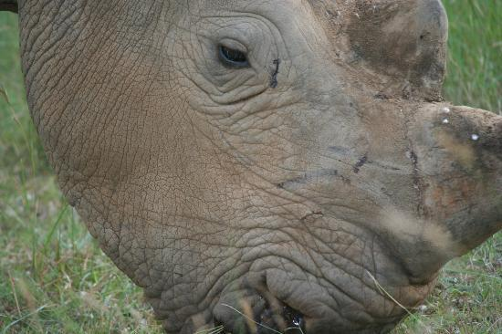 Kicheche Mara Camp: up close and personal