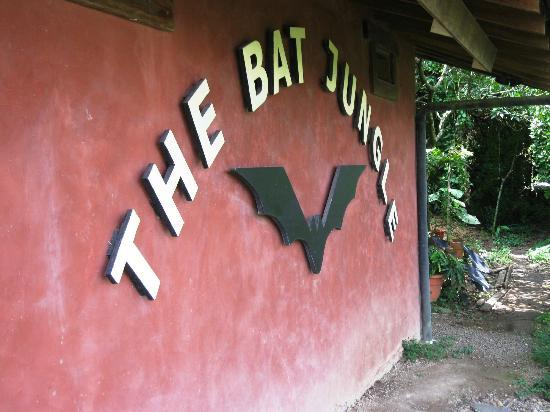The Bat Jungle: Entrance