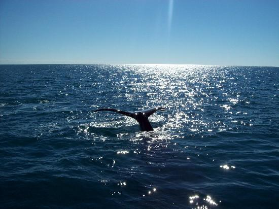 Freedom Whale Watch: Beautiful Tail in the sunlight