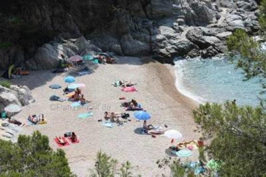 Camping Cala Llevado: Platj de Figuera