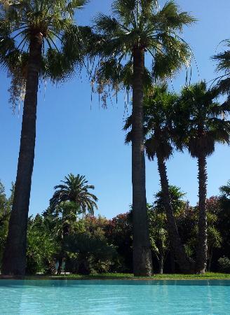 Hotel des Mimosas : Piscine