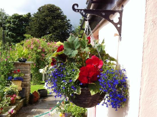 Coolabawn House: Summer flowers