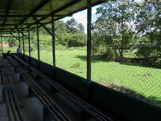Jong's Crocodile Farm & Zoo: Viewing platform for feeding time!