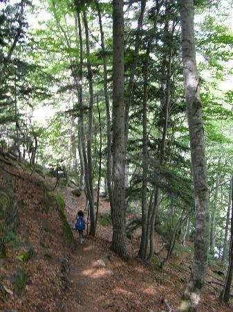 Balneario Banos de Benasque: forest
