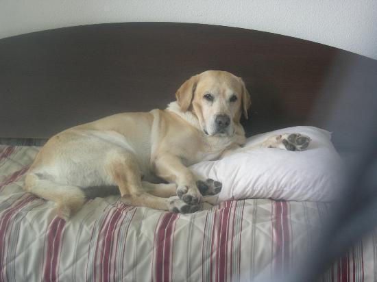 Comfort Suites Annecy Seynod: divano-letto del monolocale