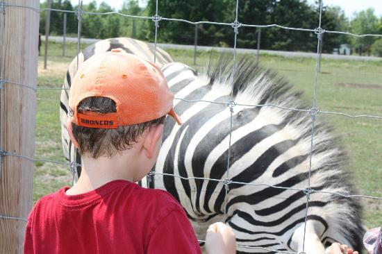 Wendover, Kanada: Up close with the zebras