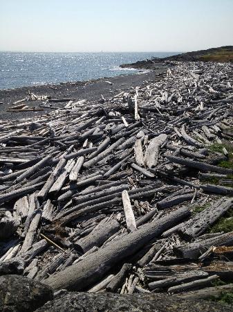San Juan Island National Historical Park: Logs everywhere