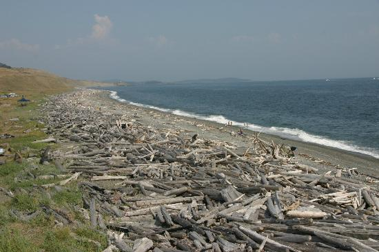 San Juan Island National Historical Park: Drift wood as far as you can see