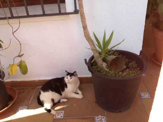 The Melting Pot Hostel Tarifa: The cat that lives at the hostel