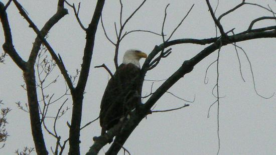 Chapman State Park: One of our frequent visitors