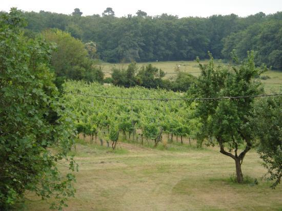 Chateau Lavergne-Dulong - Chambres d'hotes: The view from our window