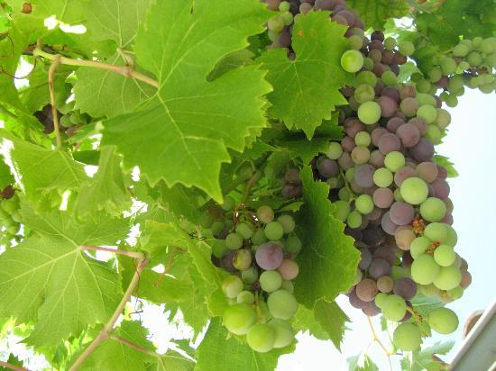 Domaine de Mourchon: more of the grapes from the terrace