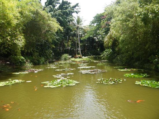 Jardin Botanique de Deshaies: ... 