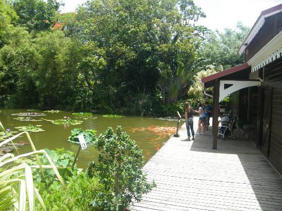 Jardin Botanique de Deshaies: Entree su jardin
