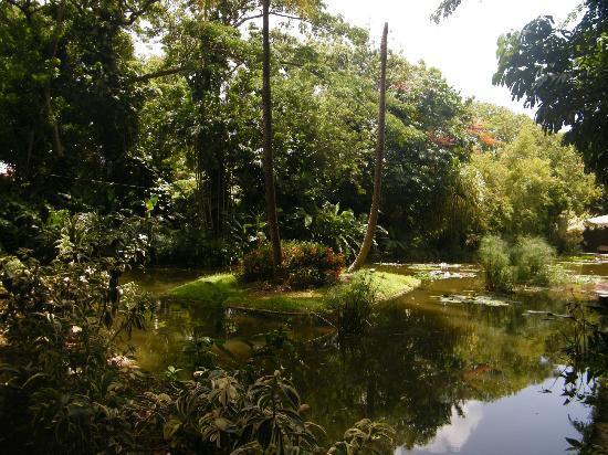 Jardin Botanique de Deshaies: ...... 