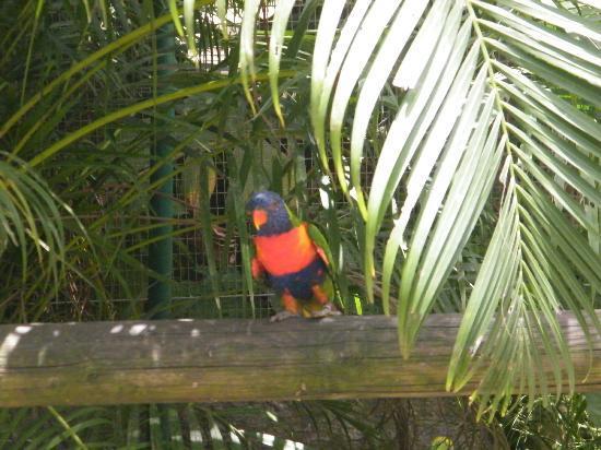 Jardin Botanique de Deshaies: ..... 