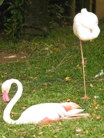 Jardin Botanique de Deshaies: les flamands!