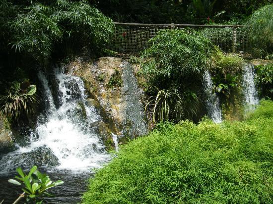 Jardin Botanique de Deshaies: ....