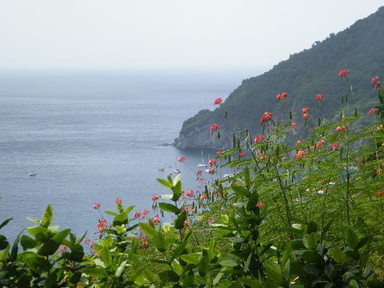 Jardin Botanique de Deshaies: Vue sur la baie