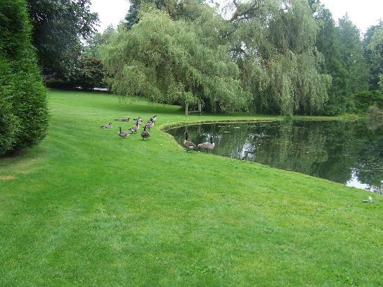 Lynden / Bellingham KOA: Goose and duck pond