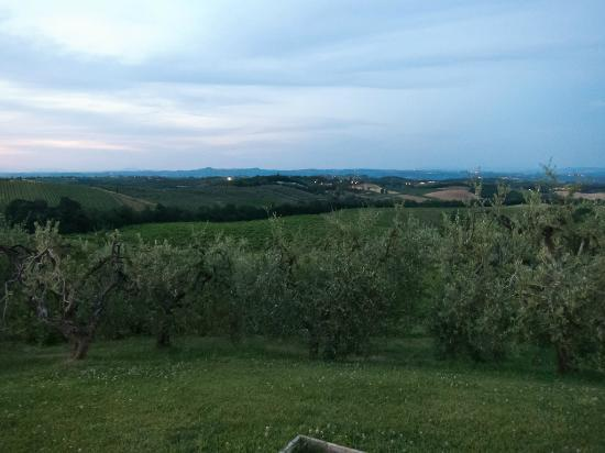 Borgo Tollena's olive groves in June