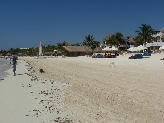Catalonia Playa Maroma: Spiaggia straordinaria