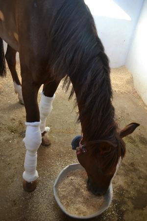 ACE- Animal Care in Egypt: Leg injuries