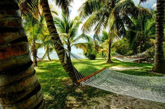 Gulf View Waterfront Resort: Hammocks for relaxing