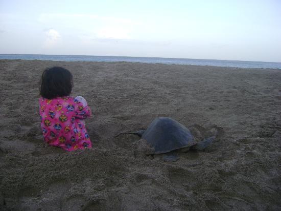 Parque Maritimo el Coco: Turtle Activities at Playa la Flor and Playa el Coco