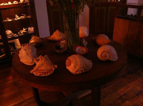 B&B Conchita Flores: Shell Collection