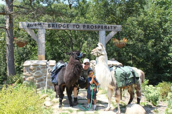 Smoky Mountain Llama Treks - Day Tours 사진
