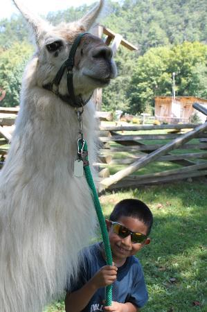 Smoky Mountain Llama Treks - Day Tours: My son with his llama Woody