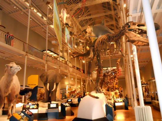 Trip Advisor Museum Of Natural History