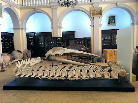 Museo Civico Emanuele Barba