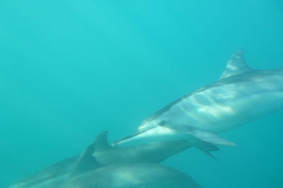 Tamarin OceanPro Divingcenter: Baie de Tamarin