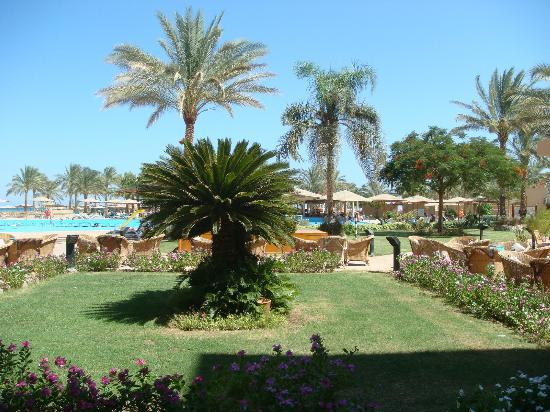 InterContinental Hotel Hurghada: Poll area